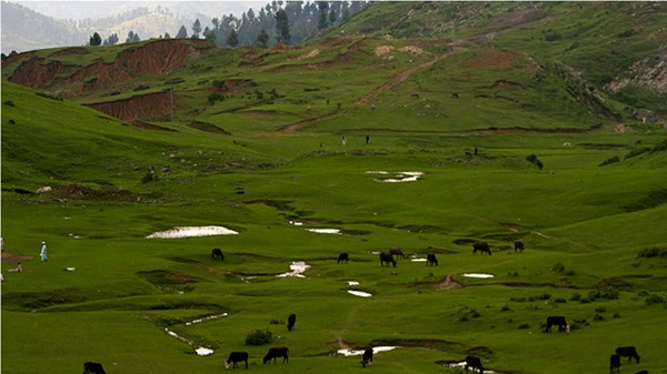 Sawat Valley Meadow (KPK) Pakistan Nature Wallpaper