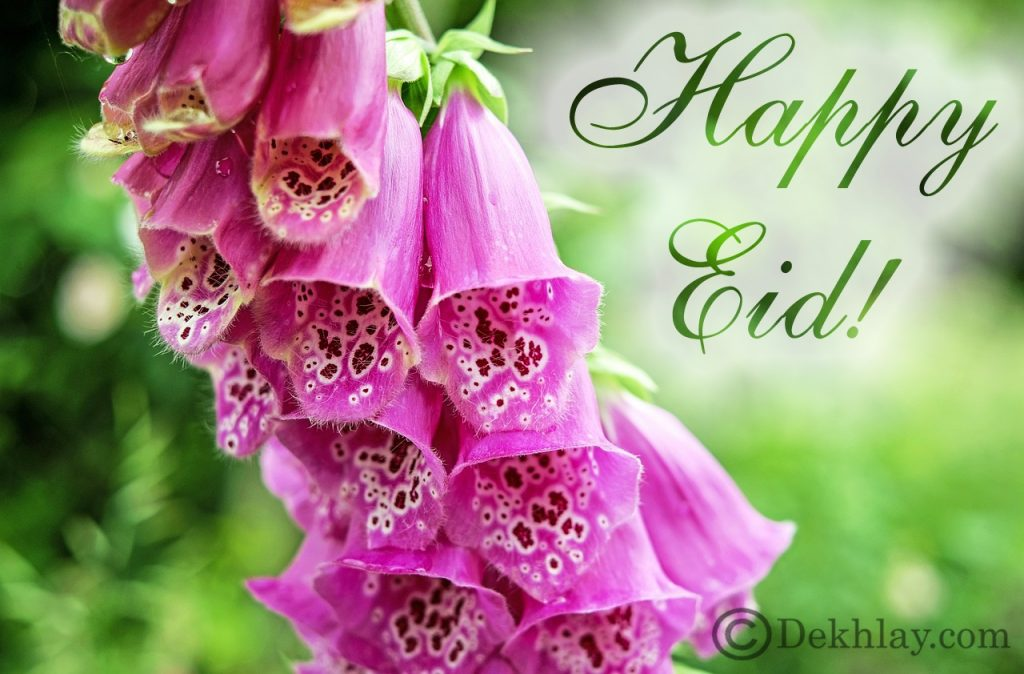 Beautiful Happy Eid ul Fitr Mubarak Wallpaper Display Picture (27)